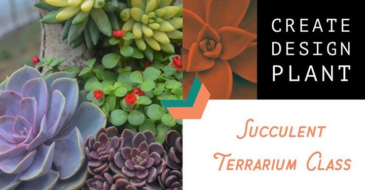 Create, Design, Plant – Succulent Terrarium